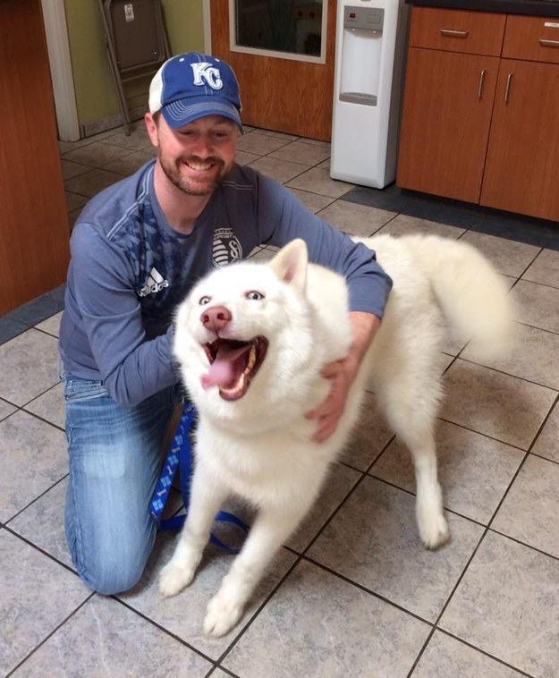 husky-muito-feliz-ao-chegar-em-novo-lar