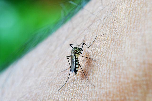 Mosquito transmissor da dengue pode infectar cães com dirofilariose