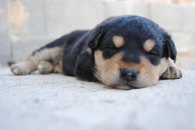 Os cachorros podem ter sonhos enquanto dormem?