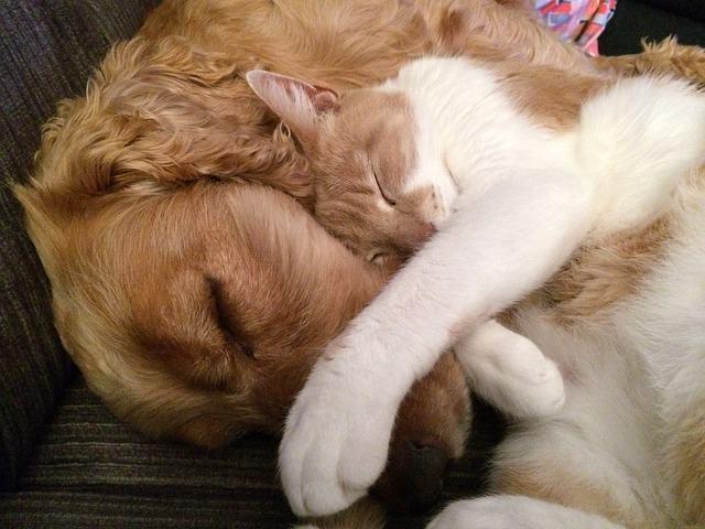 Pesquisa questiona conceito sobre cães e gatos