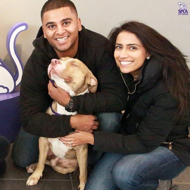 pitbull-feliz-junto-a-familia-adotiva