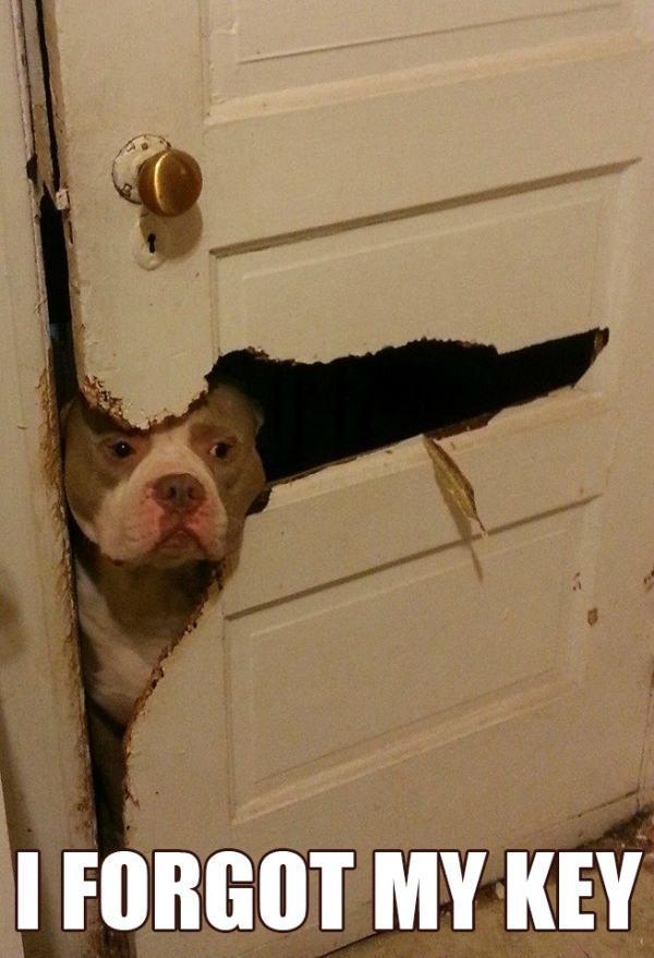 pitbull-fez-buraco-na-porta