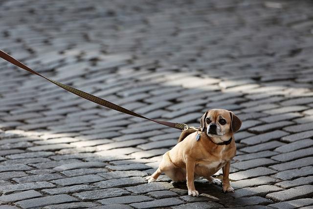 ea18a7fcc Saiba como escolher o melhor tipo de coleira para seu cachorro ...