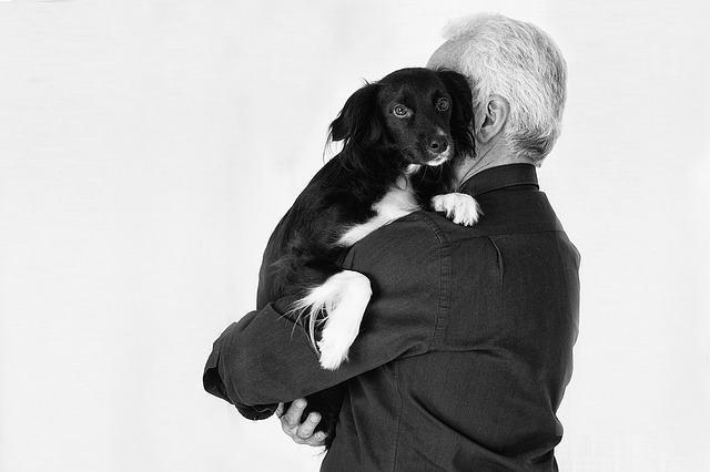 Será que é normal a forma como você trata o seu cão?