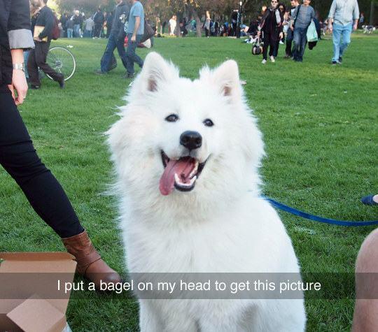 tutora-coloca-paozinho-na-cabeça-para-tirar-foto-perfeita-de-cachorro