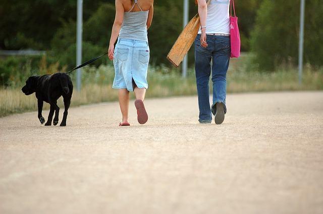 Veja como ensinar o cão a andar junto