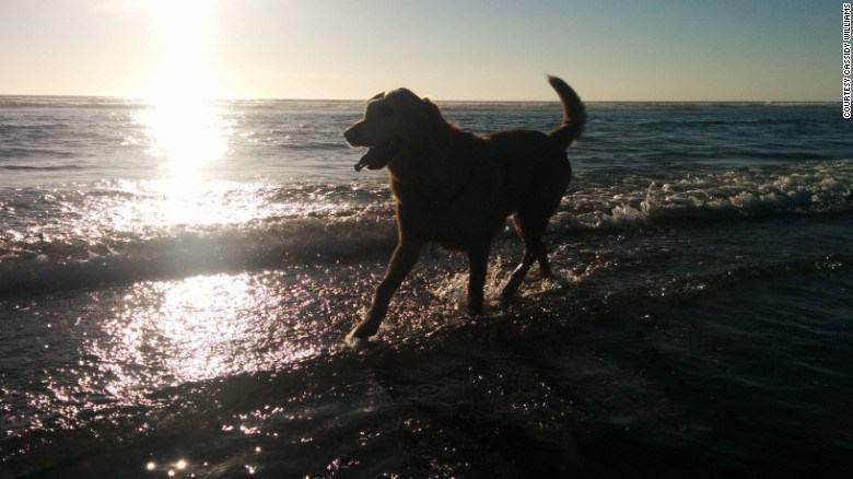 dood-passeio-na-praia