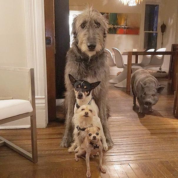 familia-de-caes-idosos