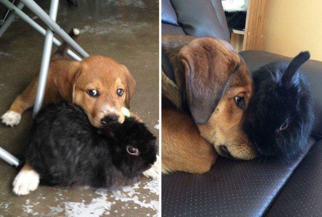 antes-e-depois-dupla-cachorro-e-coelho