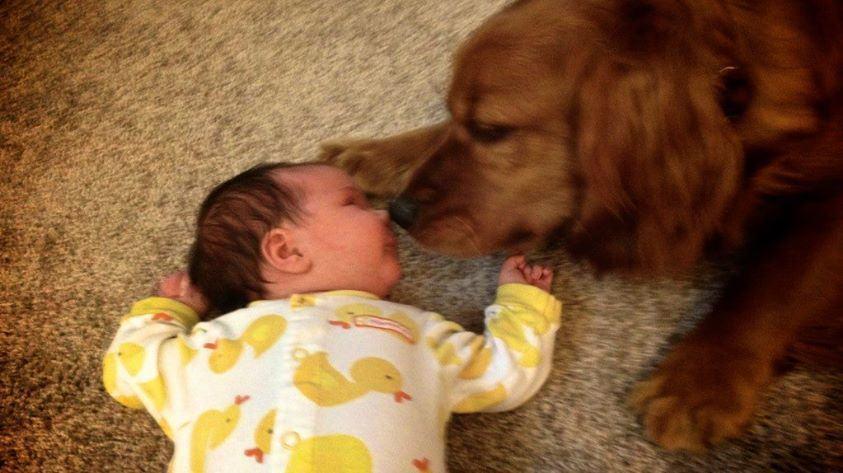 cachorro-cheirando-bebe