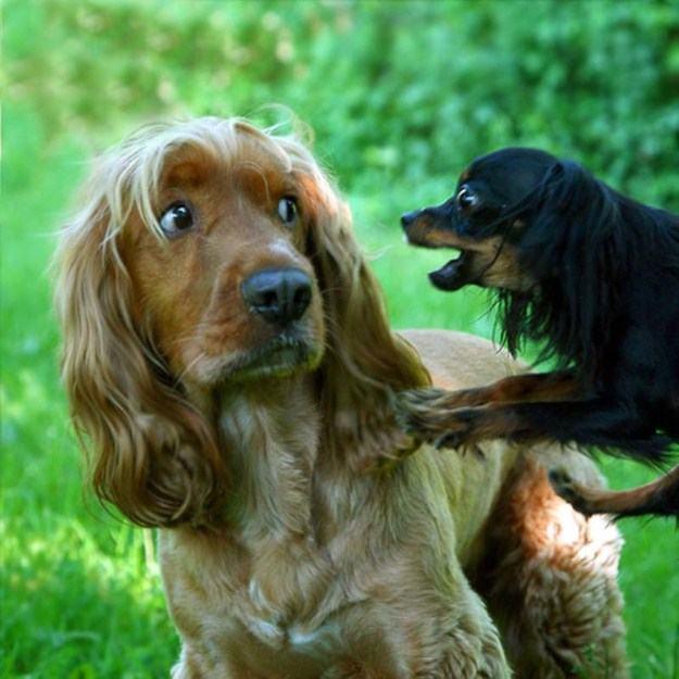 cachorro-discutindo-com-outro