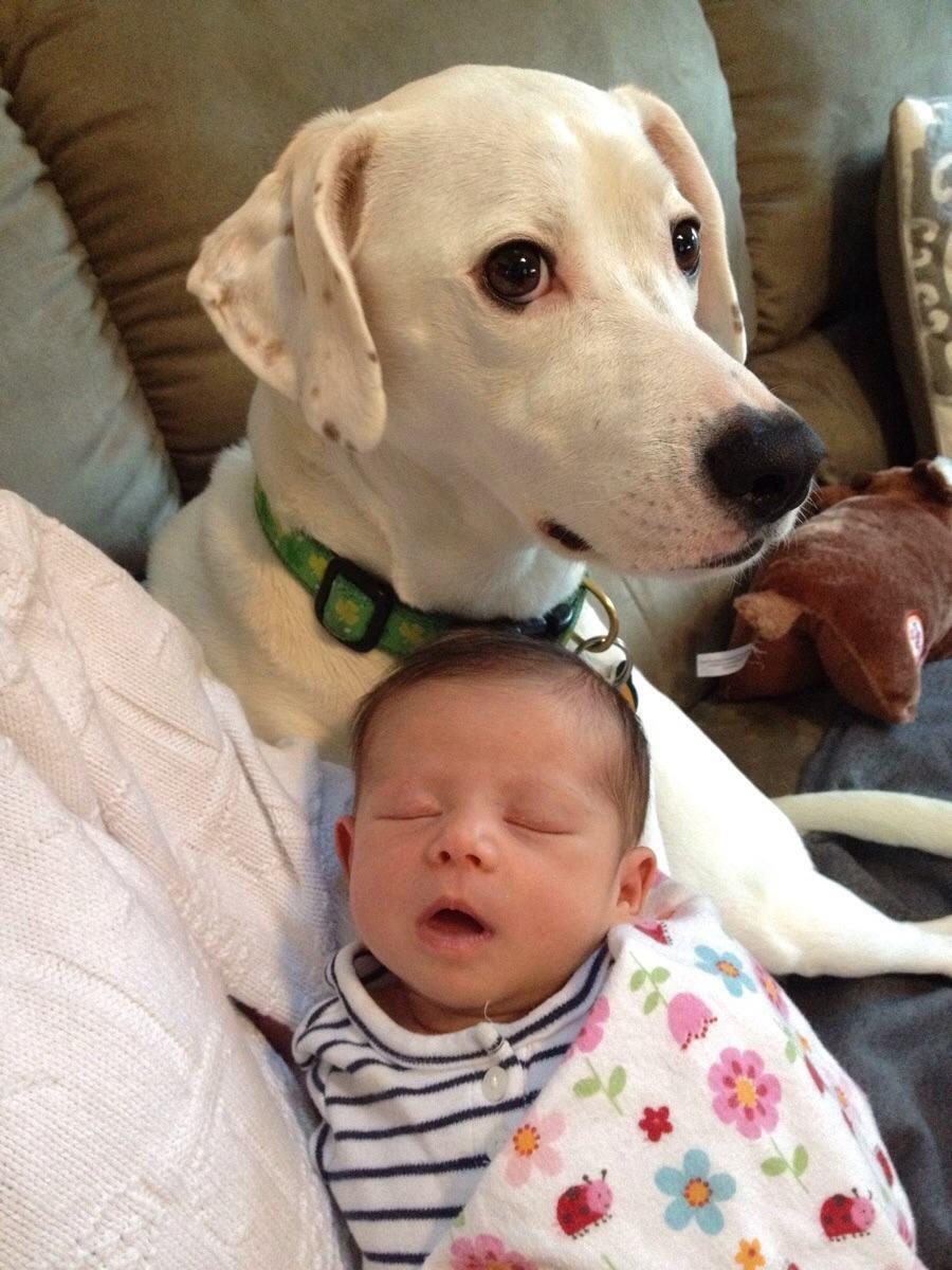 cachorro-estranhando-bebe