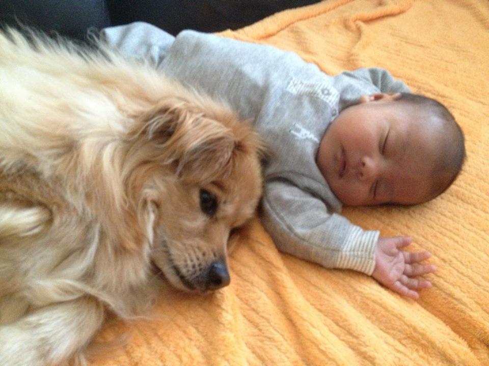 cachorro-mantendo-bebe-aquecido