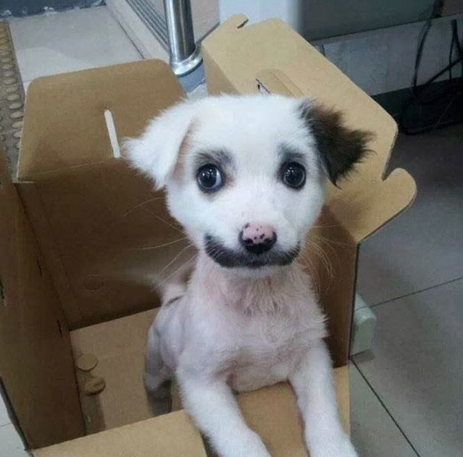 cachorro-marca-nascenca-bigode