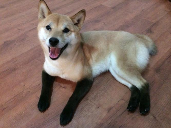 cachorro-marca-nascenca-botas