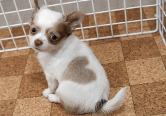 cachorro-marca-nascenca-coracao