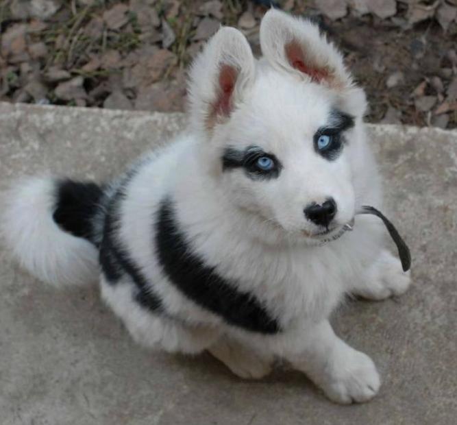 cachorro-marca-nascenca-lapis-de-olho