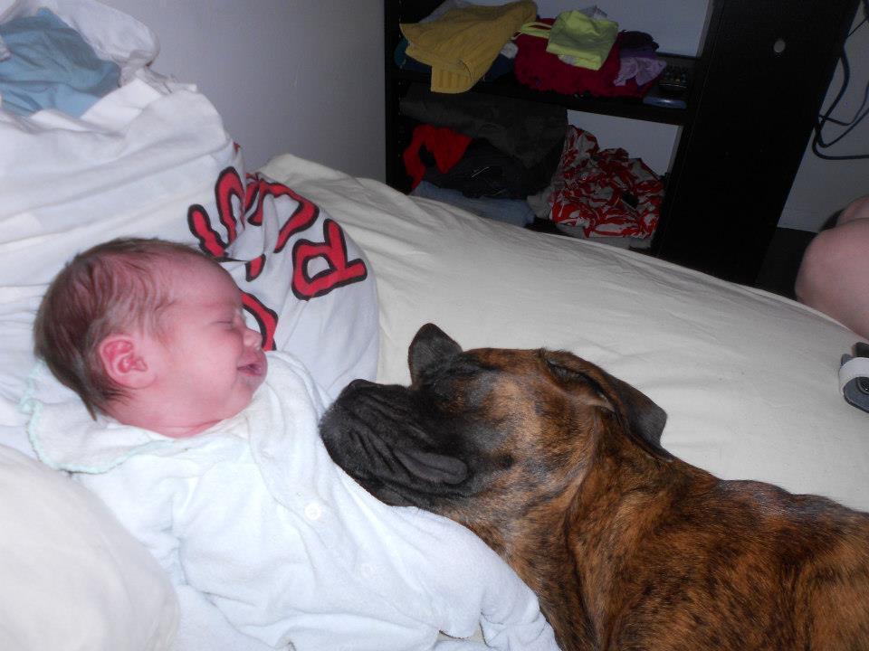 cachorro-usando-bebe-como-travesseiro