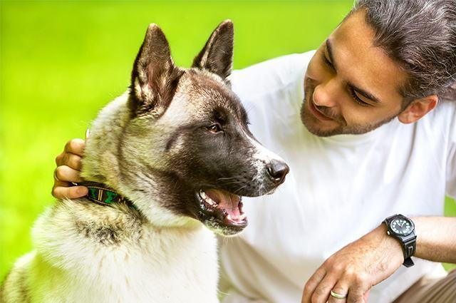 Cão ao lado de homem