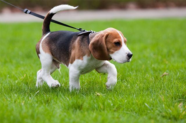 Cão com a pata levantada