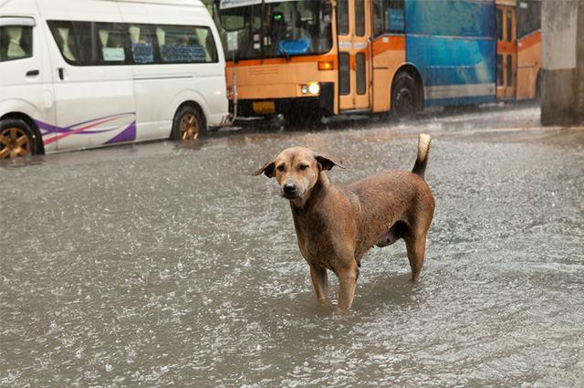 Cão em rua alagada por água de chuva
