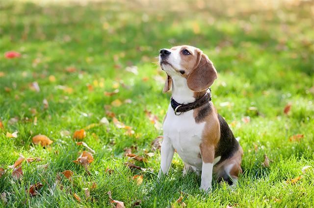 Cão olhando para o alto