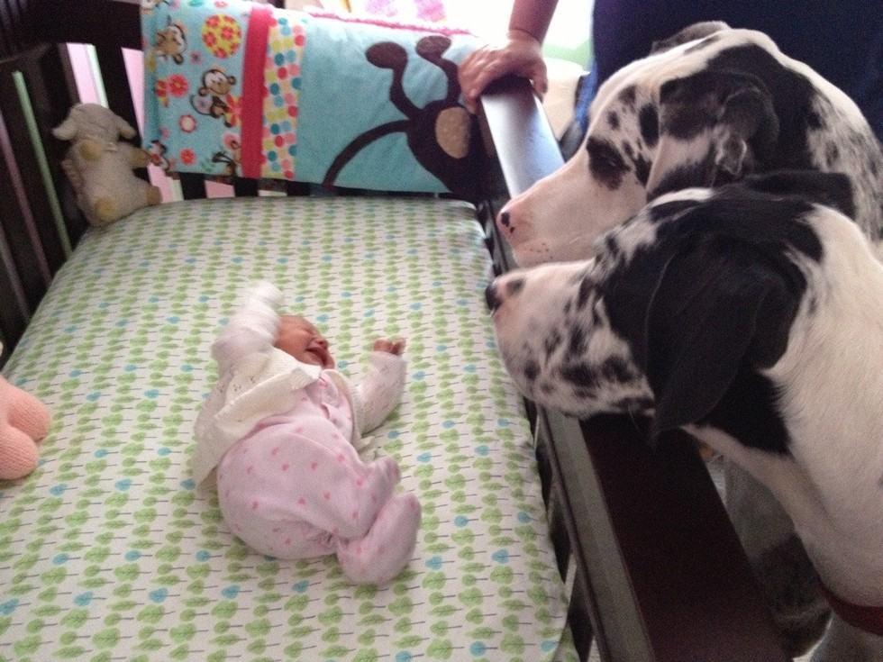 casal-de-dalmatas-olhando-bebe-chorando