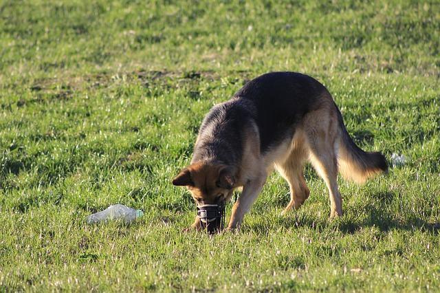 Como evitar que seu cão coma coisas do chão