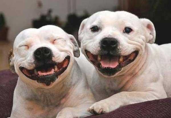 dois-caes-sorrindo