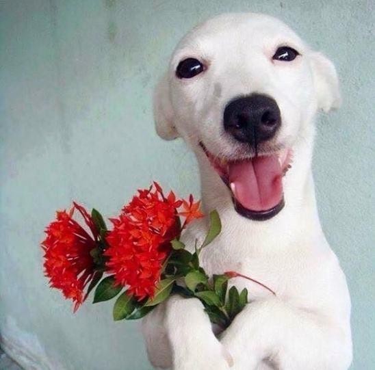 euro-cadela-sorridente