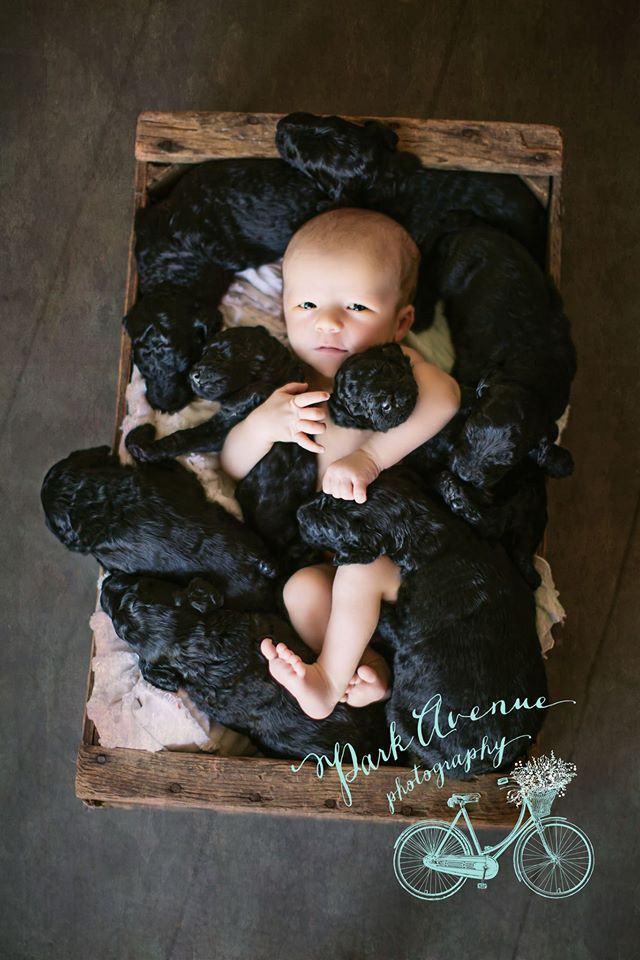 filhotes-e-bebe-nascidos-no-mesmo-dia