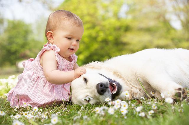Foto de bebê com cachorro