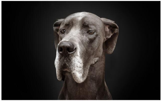 human_doge