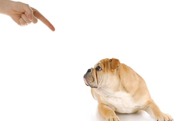 Imagem de cão levando reclamação
