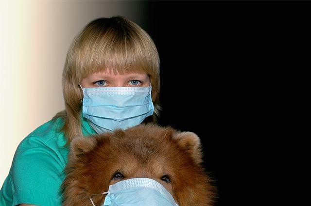 Mulher e cão com máscaras de hospital