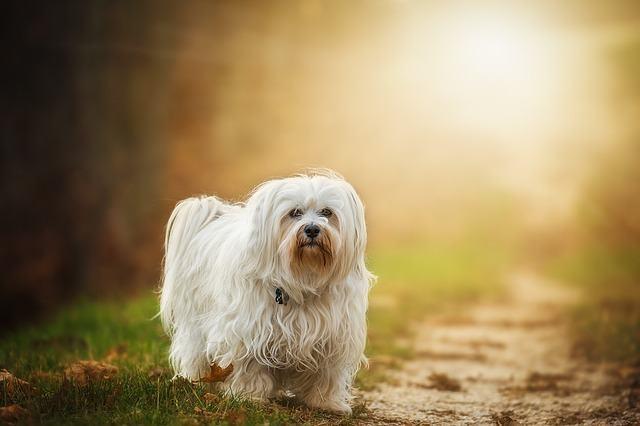 Os benefícios da castração dos cachorros