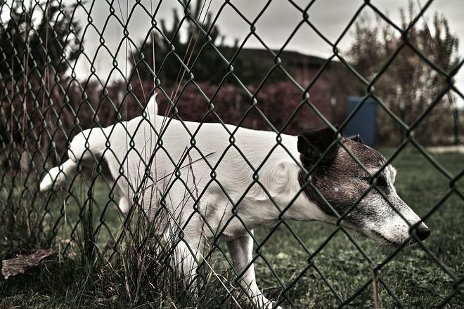Quantas vezes um cachorro deve fazer xixi ao dia?