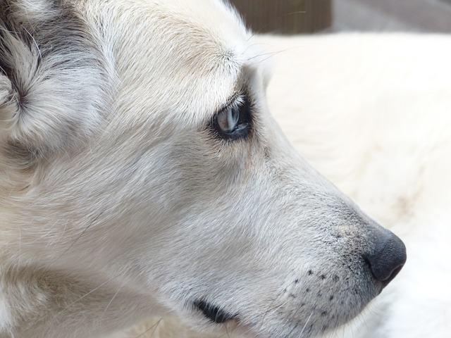 Verdade ou mito: cachorros enxergam tudo em preto e branco?