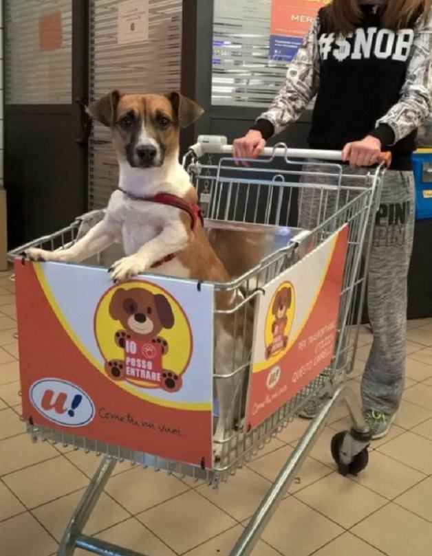 cachorro-em-carrinho-de-compras