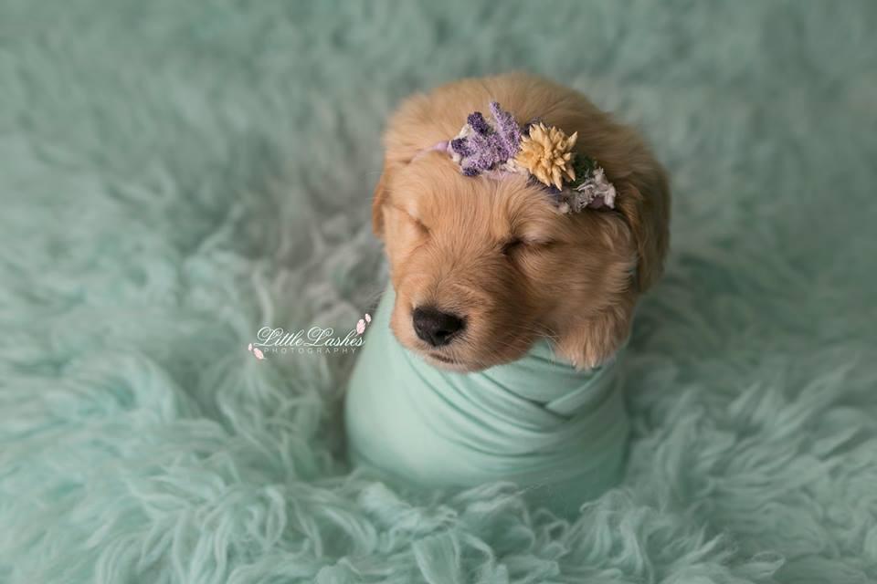cadela-filhote-ganha-ensaio-newborn