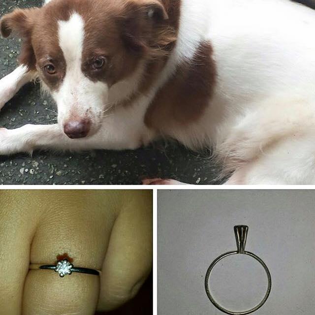 tutora-tenta-vender-anel-para-arcar-com-tratamento-de-cadela