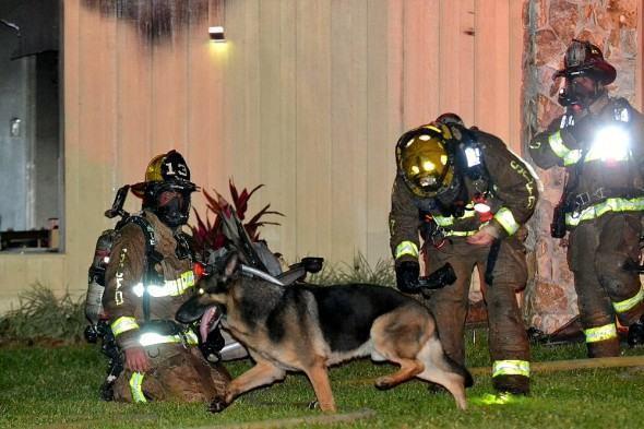 cachorro-salva-crianças-de-incendio