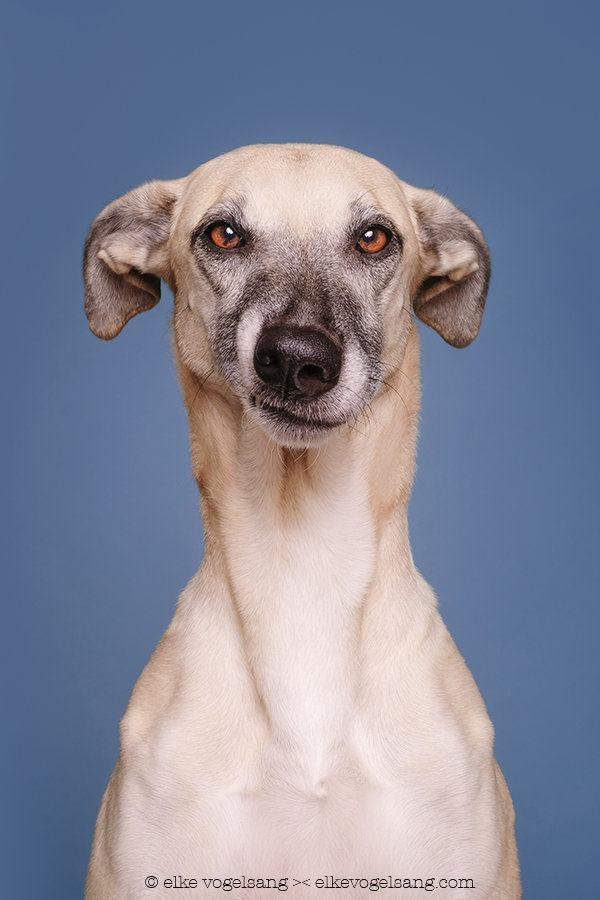 ensaio-com-cães-fazendo-expressões-muito-engraçadas