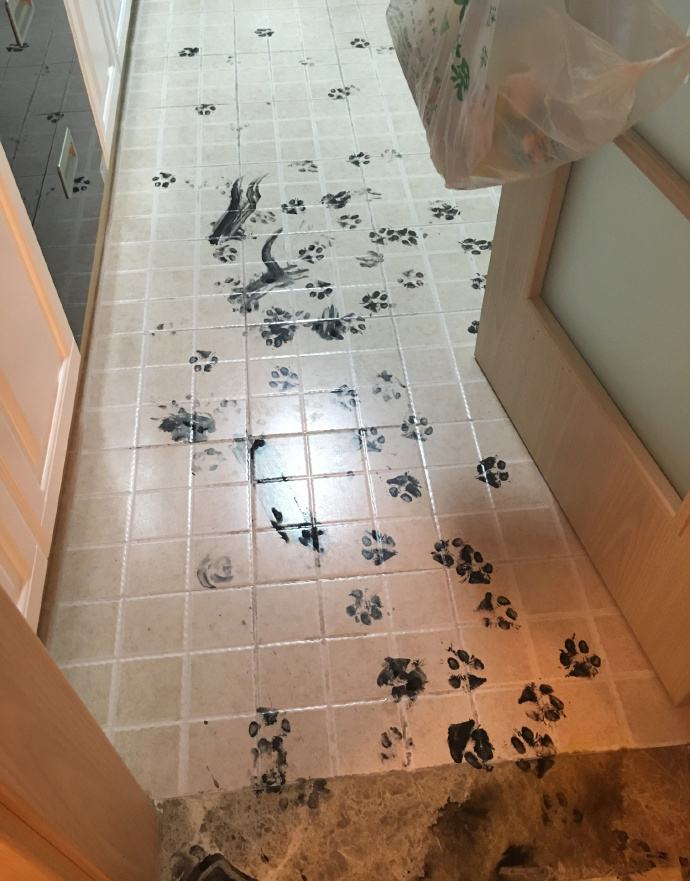husky-pinta-toda-a-casa-quando-donos-sairam