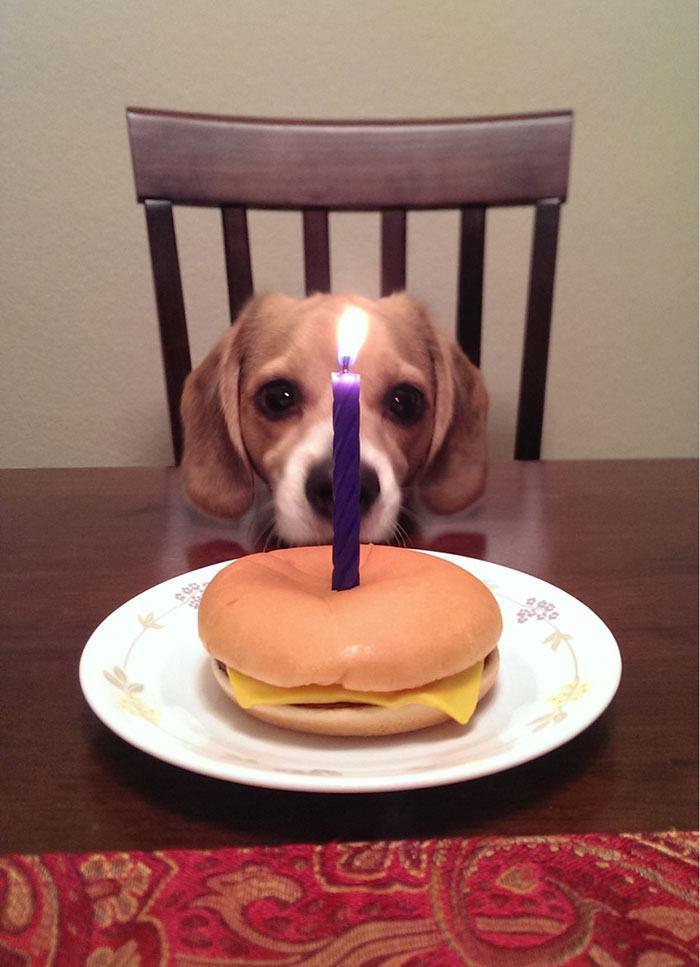 hamburguer-de-aniversario-de-cachorro
