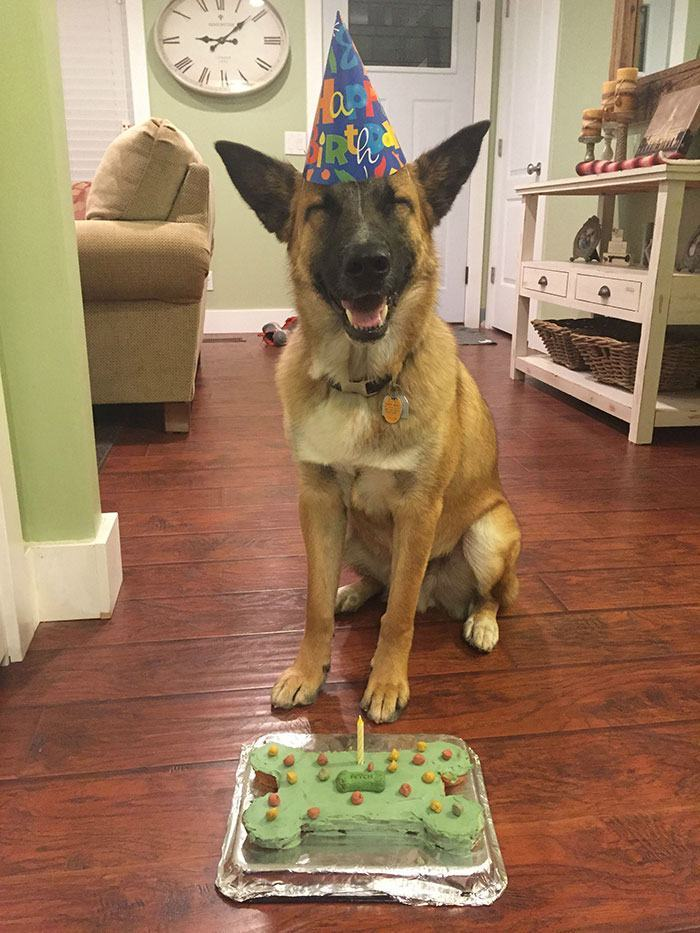 cachorro-sorrindo-por-aniversario
