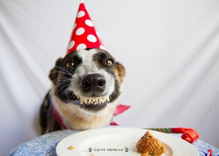 cachorro-sorrindo-em-aniversario