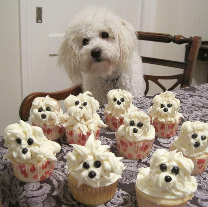 cachorro-aniversario-cupcakes