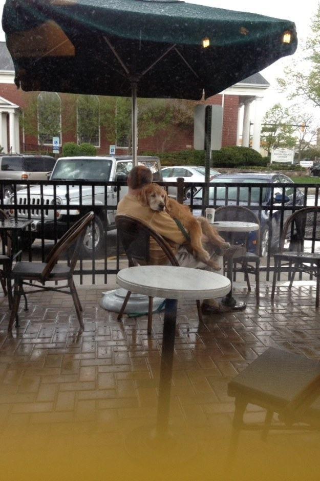 cachorro-idoso-abraçado-com-dono-em-restaurante