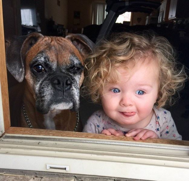 cachorro-idoso-ao-lado-de-criança
